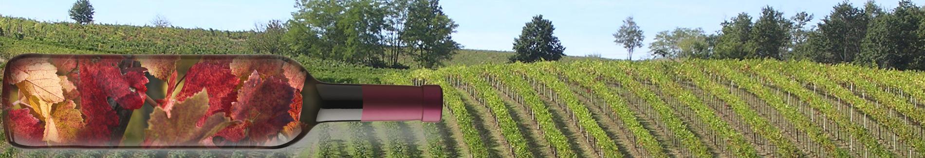 Autentico Oltrepò: vini e spumanti Oltrepò Pavese
