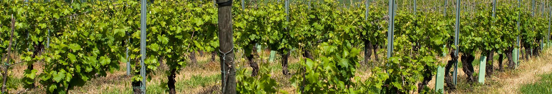 Progetto di Zonazione vinicola per la profilazione delle vigne ad opera delle Cantine Torrevilla in collaborazione con l'Università degli Studi di Milano